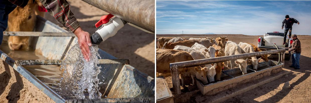 Eagle Spencer and Brandon Canyon bring water to their family's cattle from Tuba City. (Photographs by Mary F. Calvert)