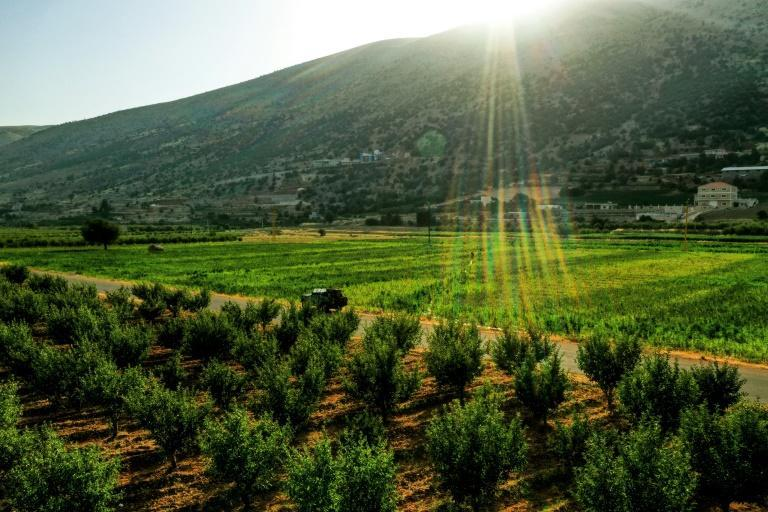 Farmers hit by Lebanon's economic crisis say growing hashish is less expensive than growing basic produce such as potatoes or green beans