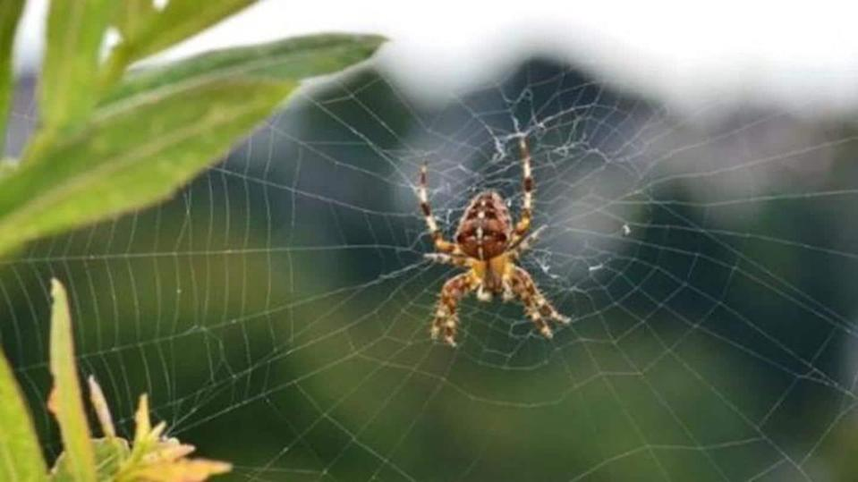 Natural ways to keep spiders out of your homes