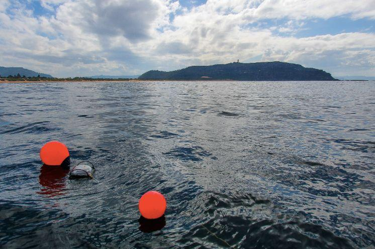 Buoys showing the placement of the shark nets off Sydney's Palm Beach. Source: Humane Society International Australia