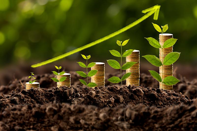 Plant shoots beside stacks of coins depicting income growth.