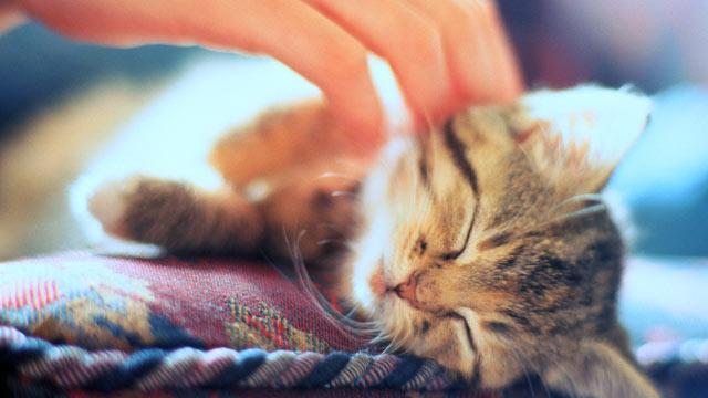 Why Do We Love Our Pets?