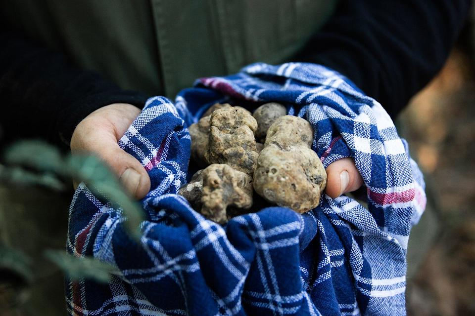 A cloth filled with truffles from Casa di Langa