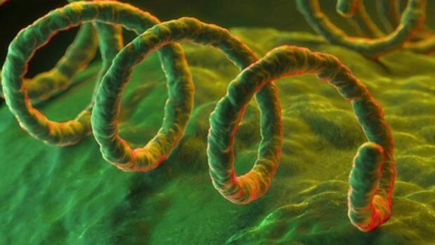 Syphilis is easily spread through sexual contact and can damage vital organs and lead to death if left untreated.  (Getty Images - image credit)