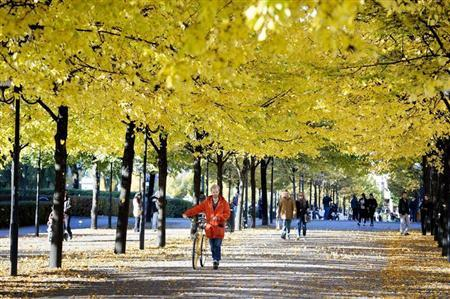 A man pushes his bicycle on a sunny autumn day down a tree-lined street in Stockholm
