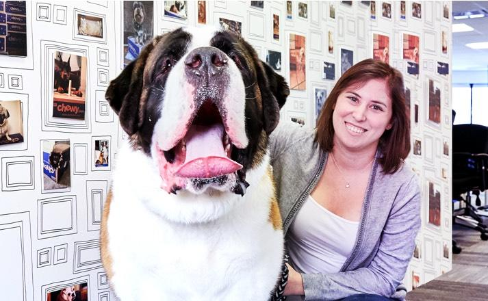 A smiling woman sitting next to and petting a giant St. Bernard dog.