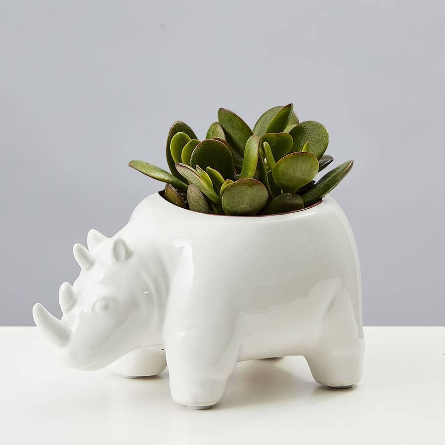 """<h2>Plants.com Safari Animal Succulent</h2><br><strong>Best For: Best Friend With Kids<br>Budget: $19.99</strong><br>The whole family will enjoy putting this adorable potted succulent out for display, and most importantly, it's totally low maintenance. It can be kept in moderate, indirect light and only needs to be watered once a week <em>tops. </em><br><br><em>Shop <strong><a href=""""https://www.plants.com/"""" rel=""""nofollow noopener"""" target=""""_blank"""" data-ylk=""""slk:Plants.com"""" class=""""link rapid-noclick-resp"""">Plants.com</a></strong></em><br><br><strong>Plants.com</strong> Safari Animal Succulents, $, available at <a href=""""https://go.skimresources.com/?id=30283X879131&url=https%3A%2F%2Fwww.plants.com%2Fp%2Fsafari-animal-succulents-177064%3Fc%3Dsucculents"""" rel=""""nofollow noopener"""" target=""""_blank"""" data-ylk=""""slk:Plants.com"""" class=""""link rapid-noclick-resp"""">Plants.com</a>"""