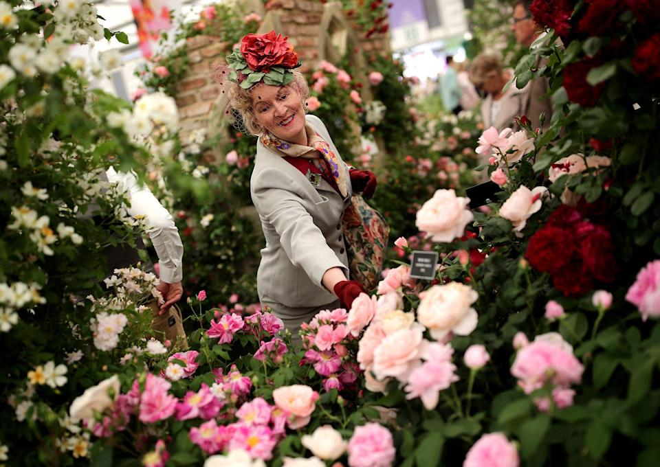 """<p>The <a href=""""https://www.goodhousekeeping.com/uk/house-and-home/gardening-advice/a25733489/rhs-chelsea-flower-show/"""" rel=""""nofollow noopener"""" target=""""_blank"""" data-ylk=""""slk:Chelsea Flower Show"""" class=""""link rapid-noclick-resp"""">Chelsea Flower Show</a> plant of the year winners are selected by a panel of 100 experts """"to promote the continuing work of breeders and nurseries in producing improved and exciting new plants,"""" according to the RHS, who run the event.<br></p><p>The RHS Chelsea Flower Show Plant of the Year winner 2021 is Cercis canadensis, also known as """"Eternal Flame"""". In second place is Allium """"Lavender Bubbles"""" and third is hybrid variety x Semponium """"Sienna"""".</p><p>Below, we round up the RHS Chelsea Flower Show plant of the year winners from every year so far and show you where you can buy them for them for yourself. The <a href=""""https://www.goodhousekeeping.com/uk/house-and-home/gardening-advice/a31278901/chelsea-flower-show-tickets/"""" rel=""""nofollow noopener"""" target=""""_blank"""" data-ylk=""""slk:Chelsea Flower Show 2021"""" class=""""link rapid-noclick-resp"""">Chelsea Flower Show 2021</a> will return this September and will feature the new <a href=""""https://www.goodhousekeeping.com/uk/house-and-home/gardening-advice/a37511774/rhs-chelsea-floristry-and-floral-design-competition/"""" rel=""""nofollow noopener"""" target=""""_blank"""" data-ylk=""""slk:RHS Chelsea Floristry and Design competition"""" class=""""link rapid-noclick-resp"""">RHS Chelsea Floristry and Design competition</a>, plus many more exciting displays and showcases.</p>"""