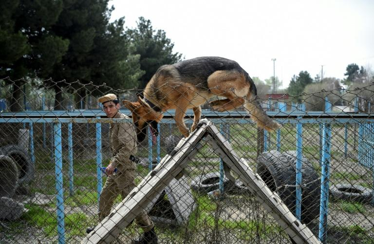 A common sight around the Afghan capital, explosives-sniffing dogs are deployed at checkpoints and government facilities, where they are an important tool in combatting the flow of homemade bombs being smuggled into Kabul