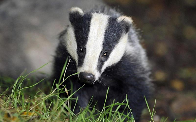 Police apologise after calling animal rights activists