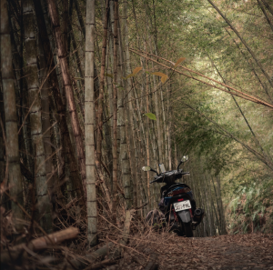 Lost somewhere with my scooter and find a beautiful bamboo forest on the road in the middle of Taiwan, the caption reads. (Courtesy of Breckler Pierre)