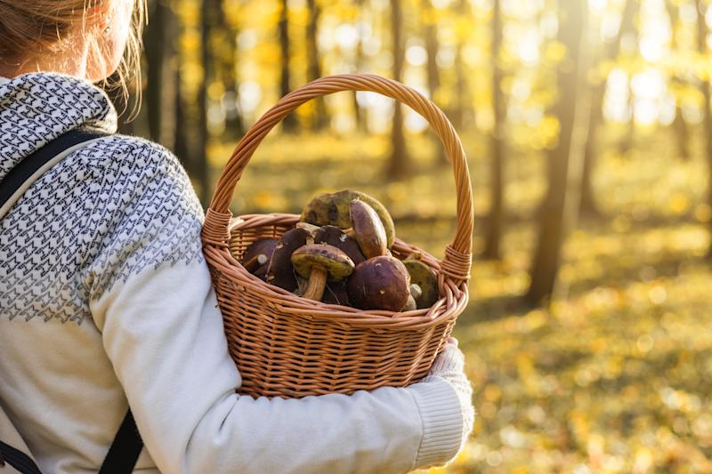 Woman with mushrooms in wicker basket in autumn forest.