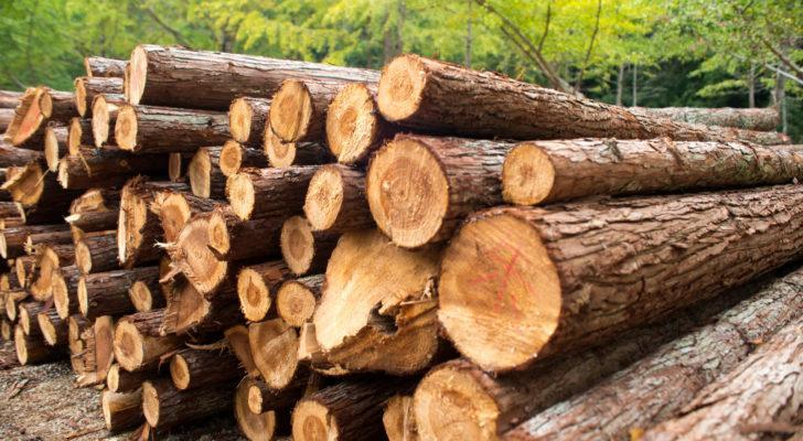 A stack of timber in a forest representing timber and logging company stocks