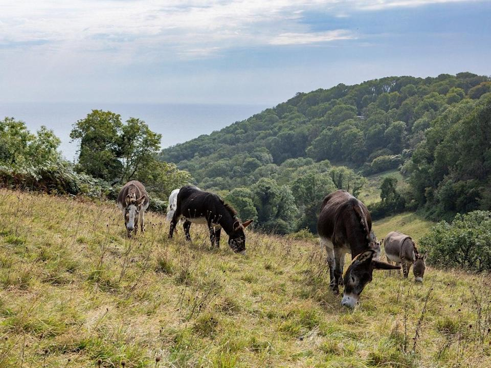 <p>Wild gardening: Donkeys' hooves can help boost the chances of the rare plants germinating</p> (PA)