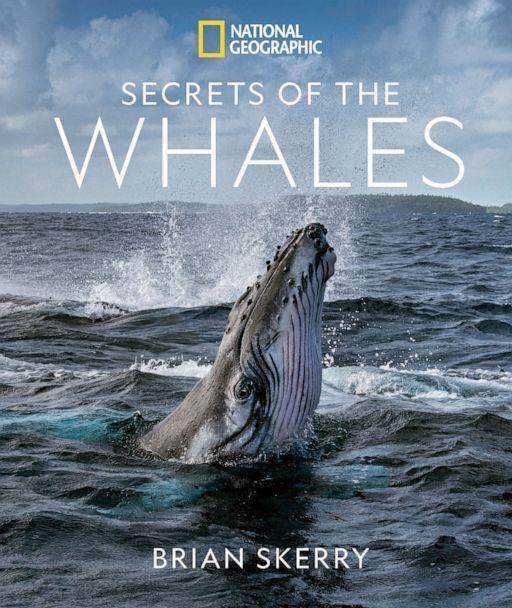 PHOTO: 'Secrets of the Whales,' 2021. (Brian Skerry)