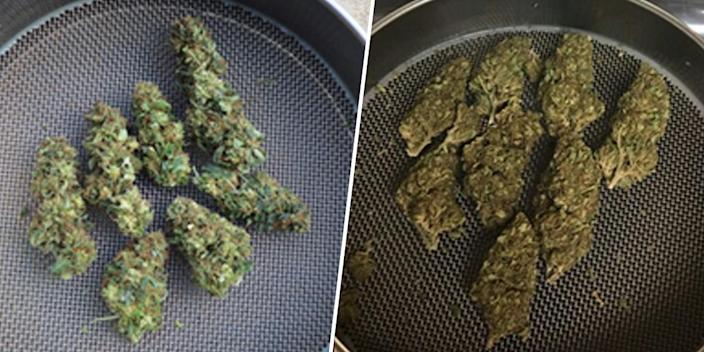 Image: Marijuana buds grown indoors at the University of Mississippi, left, and buds received through the DEA after confiscation. (University of Mississippi)