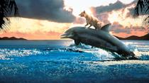 """<p><b>Paramount+'s Description:</b> """"Zeus is a dog who follows a neighbor, a marine biologist named Mary Beth (Kathleen Quinlan), to work one day. Aboard a ship, the dog meets Roxanne, a dolphin that Mary Beth is studying. When she sees the dog riding on the dolphin's back, she decides to study their friendship. A villainous fellow researcher, Claude (Arnold Vosloo), tries to steal her research, but he is thwarted by the dolphin, the dog, and the dog's young owner, Jordan (Miko Hughes). Terry (Steve Guttenberg), Jordan's father, is a songwriter who still pines for his dead wife. Jordan, together with Mary Beth's daughters, try to ignite a romance between their parents, who are both unattached.""""</p> <p><a href=""""https://www.paramountplus.com/movies/zeus-and-roxanne/DnKa1lVb6MmmXBv1S70iBFqp9gtAlmbR/"""" class=""""link rapid-noclick-resp"""" rel=""""nofollow noopener"""" target=""""_blank"""" data-ylk=""""slk:Watch  on Paramount+ here!"""">Watch  on Paramount+ here!</a></p>"""