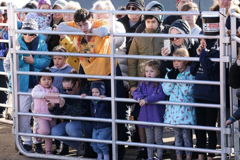 Children and parents catch a glimpse of Toa in Plimmerton