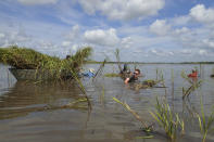 In this July 25, 2019, photo provided by LSU AgCenter and LA Sea Grant, teens at 4H Marsh Maneuvers Coastal Ecology Camp plant smooth cordgrass to restore the eroding shoreline of Bayou Petite Anse, near Avery Island, La. As storms grow more violent and Louisiana loses more of its coast, the family that makes Tabasco Sauce is fighting erosion in the marshland that buffers it from hurricanes and floods. (Mark Shirley/LSU AgCenter and LA Sea Grant via AP)