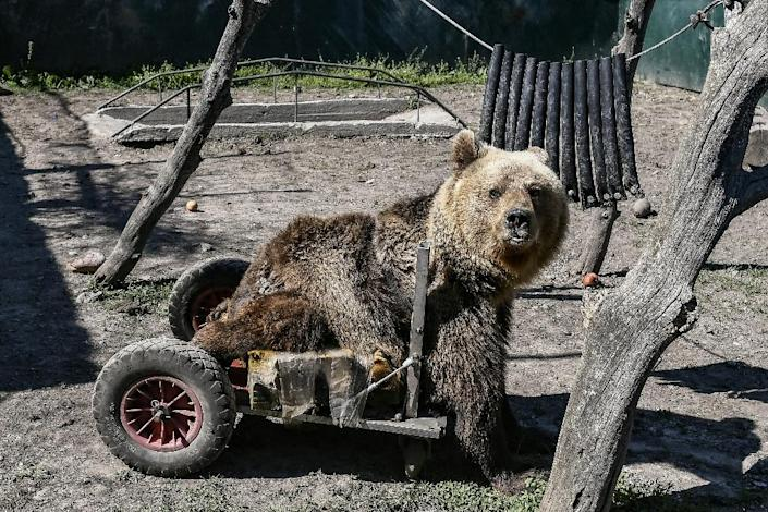 Three-year-old Usko was found in Macedonia as a baby, paralysed from the waist down. Arcturos staff fashioned a wheelbarrow that helps him get around (AFP Photo/Aris MESSINIS)