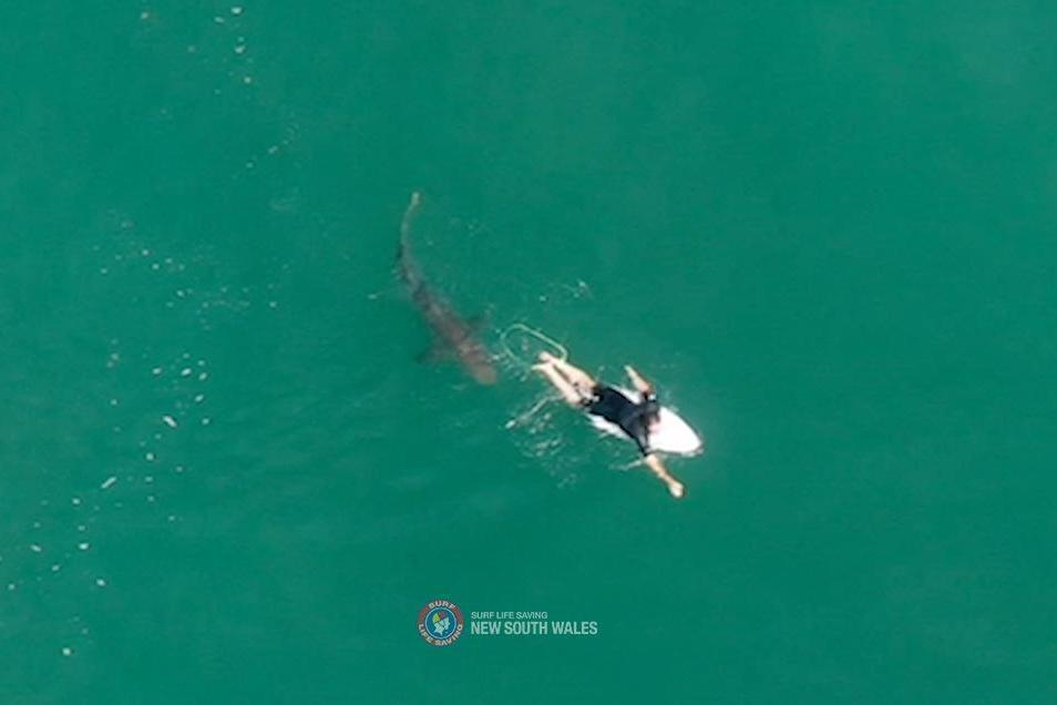 A shark swims close to World championship tour surfer Matt Wilkinson World at Sharpes Beach, New South Wales: via REUTERS
