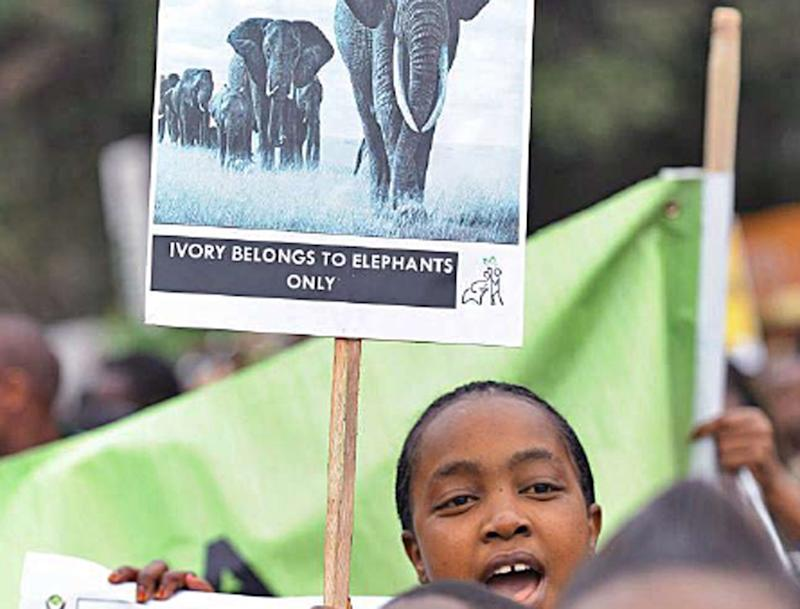 Wildlife conservationists take to the streets of Nairobi as part ofan awareness campaign dubbed 'Ivory Belongs to Elephants' (AFP)