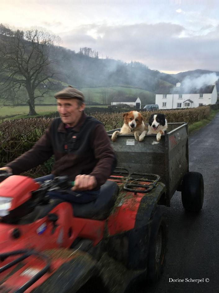 <p>Here, the winning image captures two cute pups riding on the back of a tractor in the Lake District.</p>