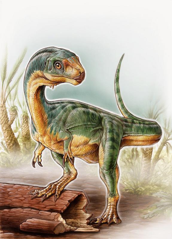 Chilesaurus diegosuarezi walked on its hind legs as other theropods did. It also had robust forelimbs that looked like those of other Jurassic theropods, such as the Allosaurus, the researchers said.