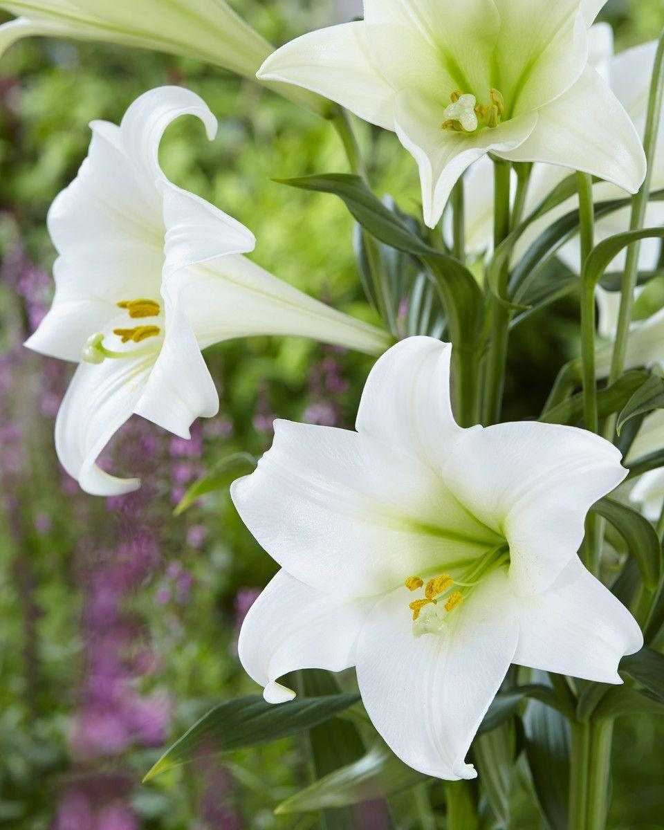 """<p>An oriental lily is a bulbous plant with an inflorescence of large, outward-facing flowers and fleshy leaves. These lilies typically have larger but fewer and more trumpet-shaped flowers than Asiatic lilies.</p><p><a class=""""link rapid-noclick-resp"""" href=""""https://go.redirectingat.com?id=127X1599956&url=https%3A%2F%2Fwww.blossominggifts.com%2Fflowers%2Flilies%2Fcasablanca-lily-cut-flower&sref=https%3A%2F%2Fwww.housebeautiful.com%2Fuk%2Fgarden%2Fplants%2Fg22113752%2Fjuly-flowers-seasonal-bloom%2F"""" rel=""""nofollow noopener"""" target=""""_blank"""" data-ylk=""""slk:BUY NOW"""">BUY NOW</a></p>"""