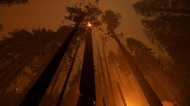 PHOTO: The Windy Fire blazes through the Long Meadow Grove of giant sequoia trees near The Trail of 100 Giants overnight in Sequoia National Park on Sept. 21, 2021, near California Hot Springs, Calif. (David Mcnew/Getty Images)