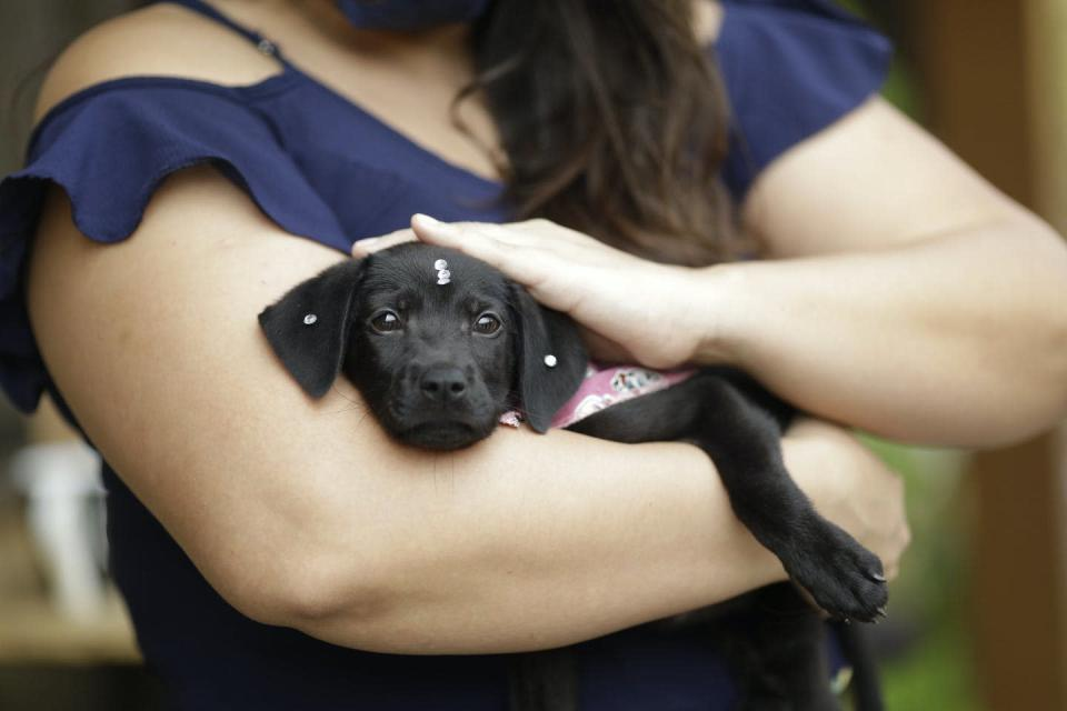 A black puppy in a woman's arms.