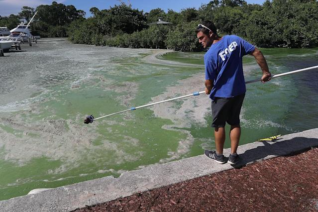 <p>Tom Wippick, from the Florida Department of Environmental Protection, takes an algae-laden water sample for testing near the Central Marine boat dock along the St. Lucie River in Stuart, Fla., July 11, 2016. (Photo: Joe Raedle/Getty Images) </p>