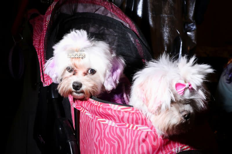 Pets parade for New York fashionista crowd