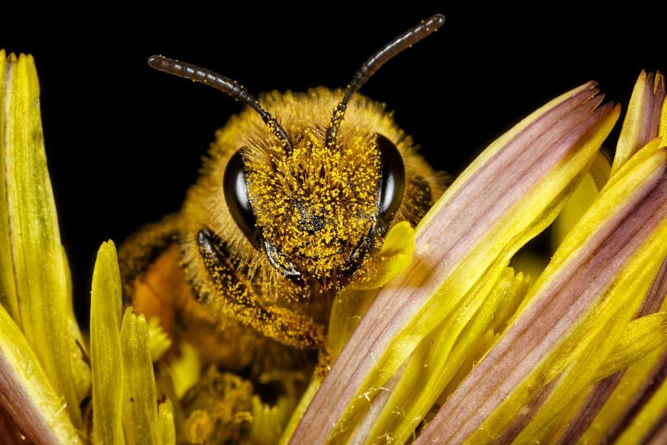 <p><strong>Honey Bee<br><br></strong>What's the buzz? Another state with a honey bee as its state insect. </p>