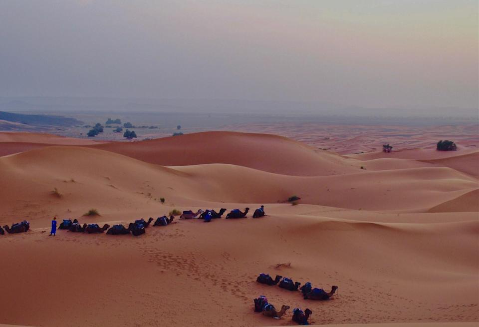 Sand dunes with camels in the Moroccan Sahara desert.
