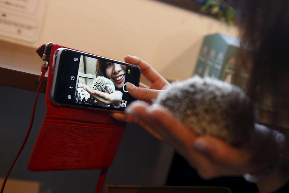 A woman takes a selfie with a hedgehog at the Harry hedgehog cafe in Tokyo, Japan, April 5, 2016. In a new animal-themed cafe, 20 to 30 hedgehogs of different breeds scrabble and snooze in glass tanks in Tokyo's Roppongi entertainment district. Customers have been queuing to play with the prickly mammals, which have long been sold in Japan as pets. The cafe's name Harry alludes to the Japanese word for hedgehog, harinezumi. REUTERS/Thomas Peter