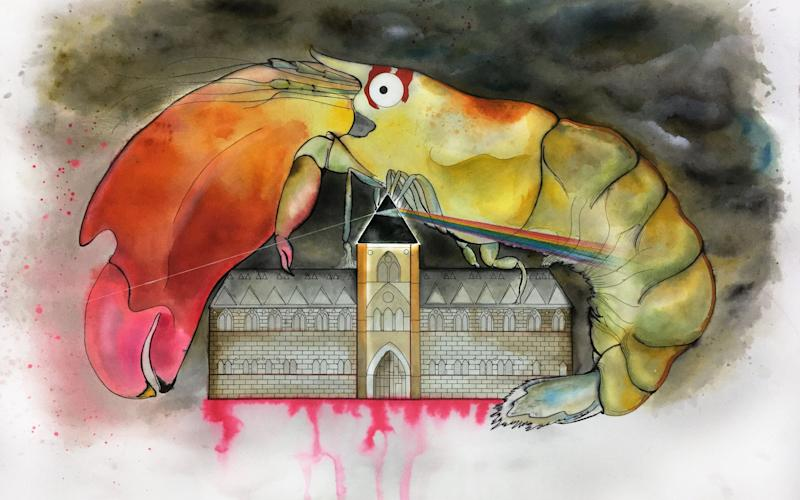 An artists impression of Another Shrimp in the Wall featuring Synalpheus pinkfloydi, the Oxford University Museum of Natural History building, and other Pink Floyd references - PA