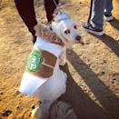 "<p>Get inspired by your morning cup of joe. Create a fun costume for your dog that will really perk them up in the morning. <b>If DIY isn't your thing, <a href=""http://www.amazon.com/gp/product/B00ZHS62Z2?gwSec=1&redirect=true&ref_=s9_simh_gw_p199_d0_i3"" rel=""nofollow noopener"" target=""_blank"" data-ylk=""slk:try this!"" class=""link rapid-noclick-resp"">try this!</a></b> The look of ""how could you do this to me"" that you see in this photo is not included. <i>Photo: Instagram/@annabelmehran</i></p>"
