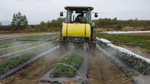 PHOTO: A worker rides a tractor while spraying organic pesticide on crops at a farm in Hudson, N.Y., May 18, 2020.  (Angus Mordant/Bloomberg via Getty Images)