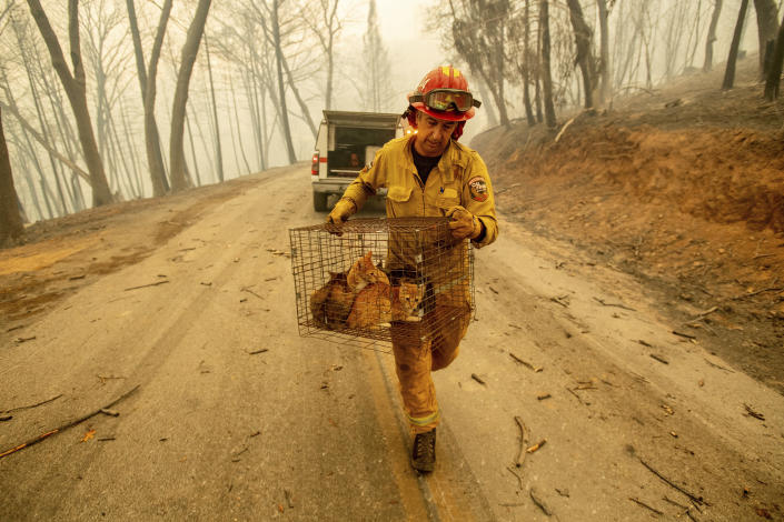 <p>Capt. Steve Millosovich carries a cage of cats while battling the Camp Fire in Big Bend, Calif., on Nov. 9, 2018. Millosovich said the cage fell from the bed of a pick-up truck as an evacuee drove to safety. (Photo: Noah Berger/AP) </p>