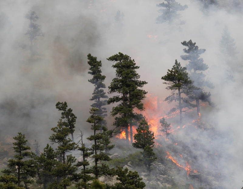 Fire burns through trees on the Hewlett wildfire in the Poudre Canyon northwest of Fort Collins, Colo., on Thursday, May 17, 2012. More than 50 homes were evacuated on Thursday.  The fire has grown from 1.5 square miles to 8 square miles in the last day as erratic wind gusts of up to 50 mph moved into the area fueled by thunderstorms that didn't produce rain.  (AP Photo/Ed Andrieski)