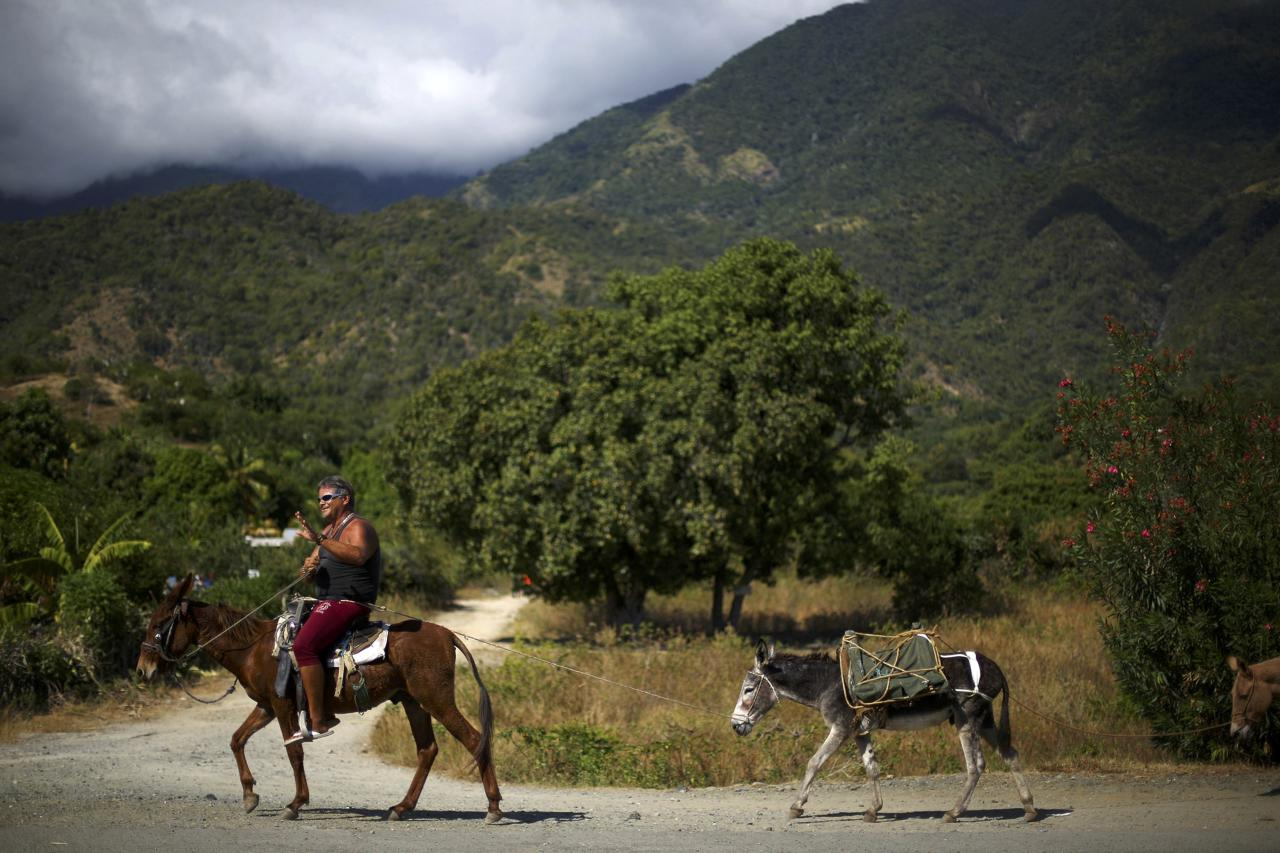 A man guides his animals down a road along Cuba's southern coast and in the foothills of the Sierra Maestra mountains, where President Fidel Castro launched his armed revolution in 1956, as the area prepares for tomorrow's arrival of the caravan carrying Castro's ashes, on the outskirts of Santiago de Cuba, Cuba, December 2, 2016.  REUTERS/Ivan Alvarado