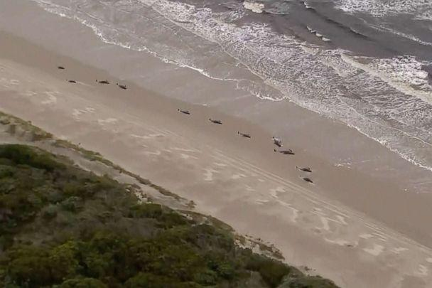 PHOTO: Aerial video shows numerous stranded whales along the coastline, Sept. 23, 2020, near the remote west coast town of Strahan on the island state of Tasmania, Australia, Sept.23, 2020. (Australian Broadcast Corporation via AP)