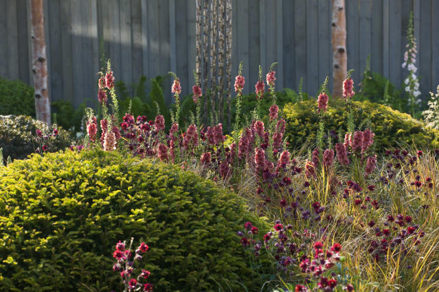 The Chelsea Flower show is going virtual this year, pictured a garden from the 2014 Chelsea Flower Show. (Getty Images)