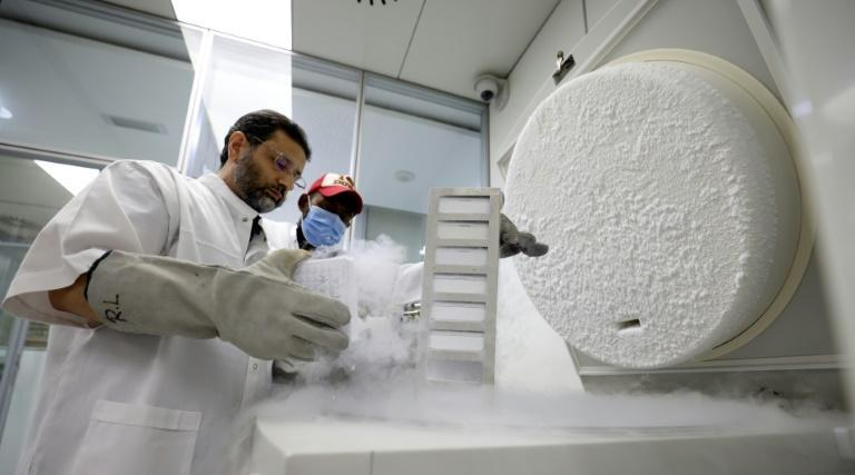 Transferring embryos to surrogate mothers can step up the rate of clone production (AFP/Karim SAHIB)