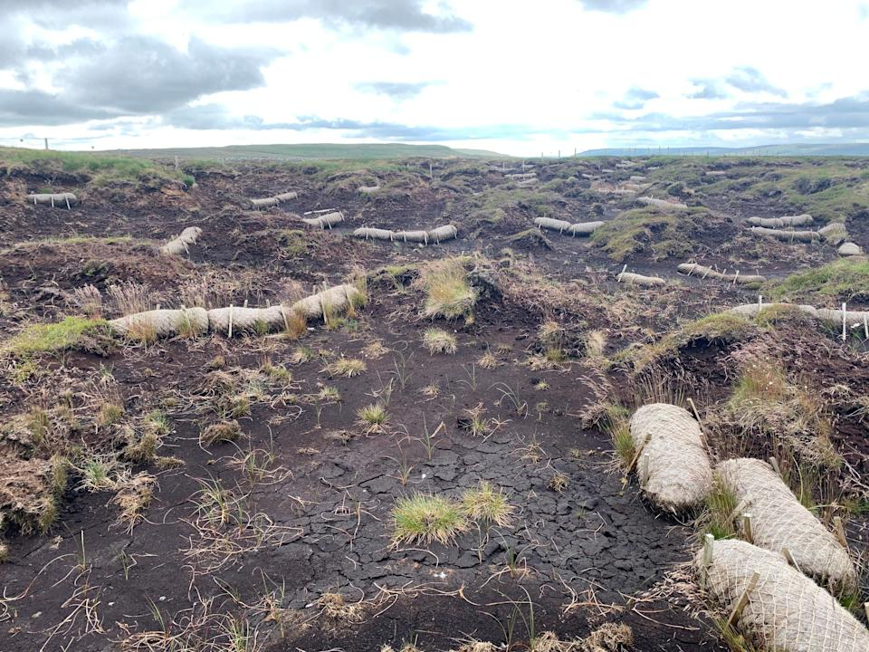 Degraded peat at Fleet Moss in the Yorkshire Dales (Daisy Dunne)