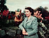 <p>This stunning photo of Elizabeth in the Balmoral gardens with her dog was taken the year she became Queen.</p>