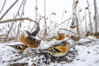 <p>This photo of wild birds enjoying an unmown field of sunflowers in the winter won the 2nd Place spot in the contest's Wildlife category. Photographer Mateusz Piesiak from Poland took home the honor. </p>