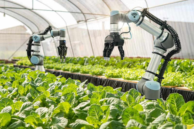 Smart robotic farmers in agriculture futuristic robot automation to vegetable farm,Smart farm concept