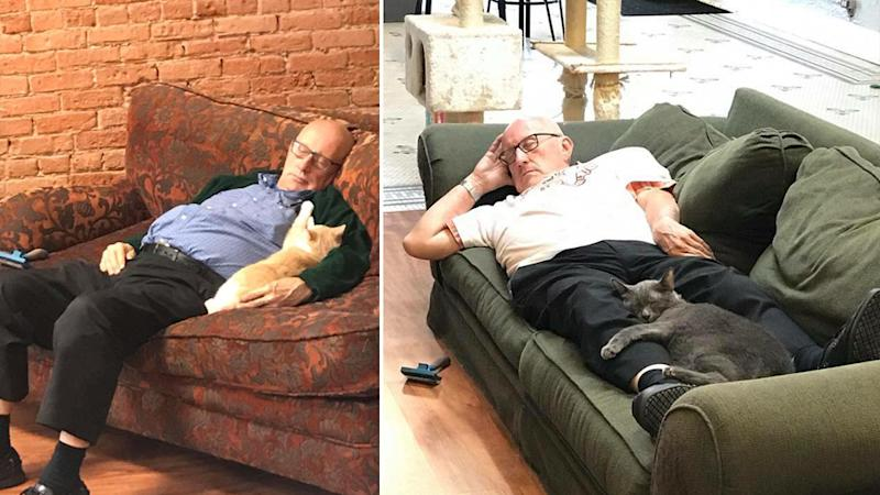 Terry Lauerman, a 75-year-old man, that cuddles cats three hours each day.